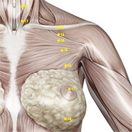 ST16 Stomach Meridian Acupuncture Point - Muscular / Muscle level.