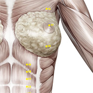 ST18 Stomach Meridian Acupuncture Point - Muscular / Muscle level.