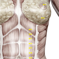 ST19 Stomach Meridian Acupuncture Point - Muscular / Muscle level.