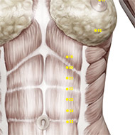 ST20 Stomach Meridian Acupuncture Point - Muscular / Muscle level.