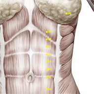 ST21 Stomach Meridian Acupuncture Point - Muscular / Muscle level.