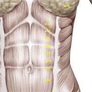 ST22 Stomach Meridian Acupuncture Point - Muscular / Muscle level.