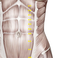 ST24 Stomach Meridian Acupuncture Point - Muscular / Muscle level.