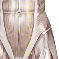 ST27 Stomach Meridian Acupuncture Point - Muscular / Muscle level.