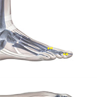 ST44 Stomach Meridian Acupuncture Point - Skeletal / Skeleton level.