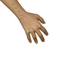 TB03 Triple Burner or Sanjiao Meridian Acupuncture Point - Dermal / Skin level.