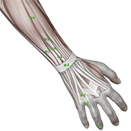 TB04 Triple Burner or Sanjiao Meridian Acupuncture Point - Muscular / Muscle level.