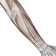 TB09 Triple Burner or Sanjiao Meridian Acupuncture Point - Muscular / Muscle level.