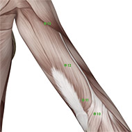 TB12 Triple Burner or Sanjiao Meridian Acupuncture Point - Muscular / Muscle level.