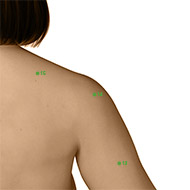 TB14 Triple Burner or Sanjiao Meridian Acupuncture Point - Dermal / Skin level.