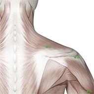 TB15 Triple Burner or Sanjiao Meridian Acupuncture Point - Muscular / Muscle level.