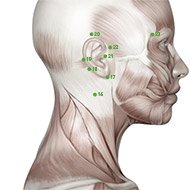 TB16 Triple Burner or Sanjiao Meridian Acupuncture Point - Muscular / Muscle level.