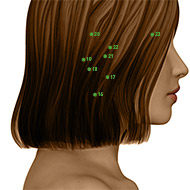 TB16 Triple Burner or Sanjiao Meridian Acupuncture Point - Dermal / Skin level.