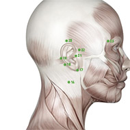 TB18 Triple Burner or Sanjiao Meridian Acupuncture Point - Muscular / Muscle level.
