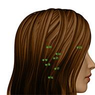 TB20 Triple Burner or Sanjiao Meridian Acupuncture Point - Dermal / Skin level.