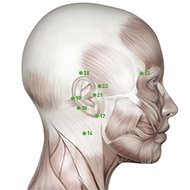 TB21 Triple Burner or Sanjiao Meridian Acupuncture Point - Muscular / Muscle level.